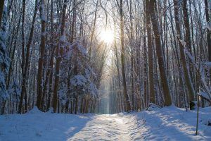 Enero-Paisaje nevado 2