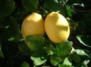 Febrero-Limones 2