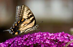 Abril-Primavera Mariposa