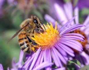 Abril-Primavera abeja