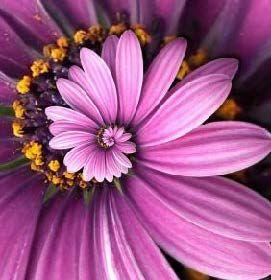 espiral flor