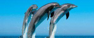 cabecera-delfines
