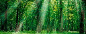 cabecera-bosque rayos