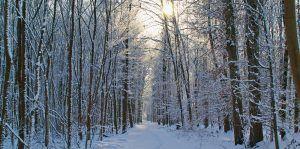 enero-paisaje-nevado-g