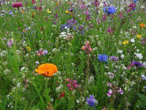 primavera-flores-g