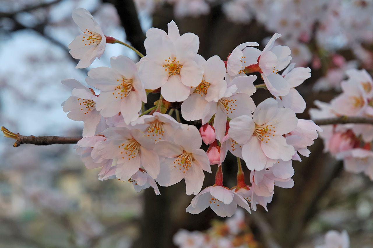 primavera-sanjorge