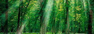 sliders-home-bosque-1