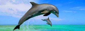 sliders-home-delfin-1