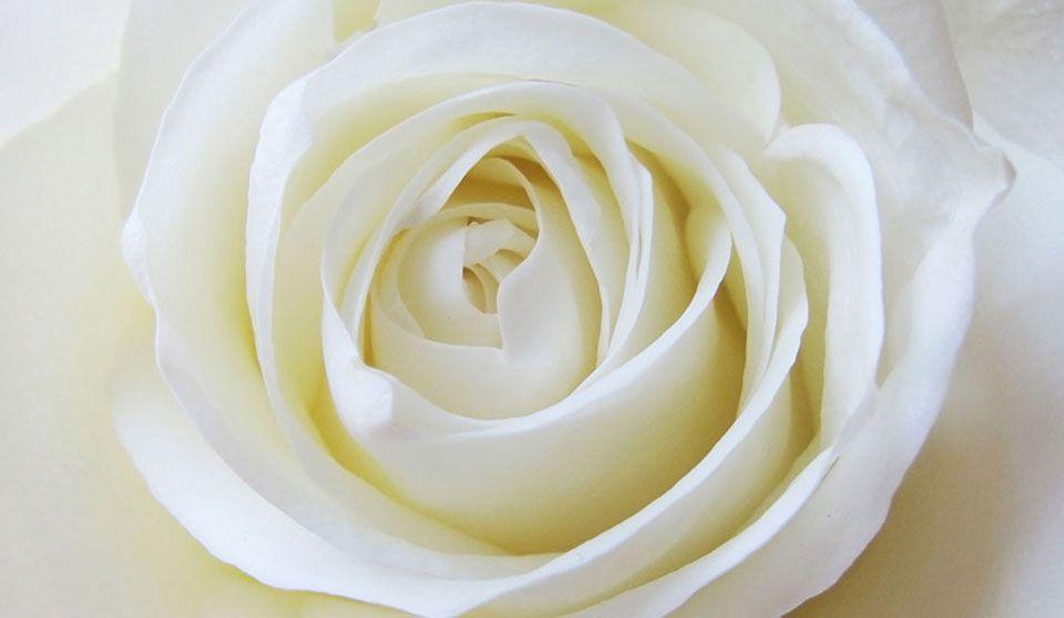 FP-rosa-blanca-estrecha