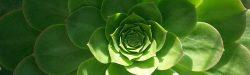 cabecera-geometria-naturaleza