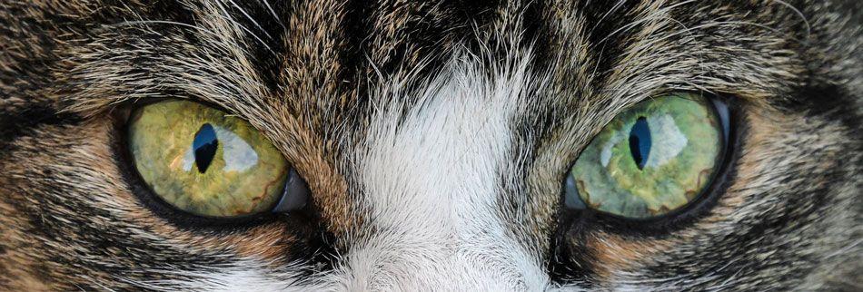 eterico-ojos-2