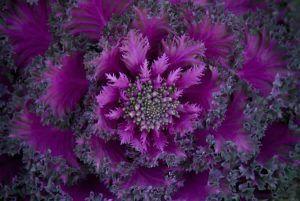 naturaleza-fractal-6
