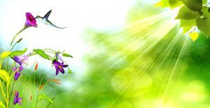 nature_backgrounds